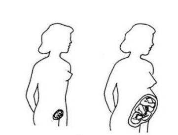 子宫的变化