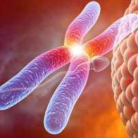 染色体异常的原因是什么这五大因素看了就懂