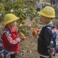 【视频】采摘喂食感受丰收喜悦 秋日乡村野趣令孩子流连