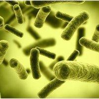 抗过敏益生菌选择重点你真的懂吗?这些可以帮到你!