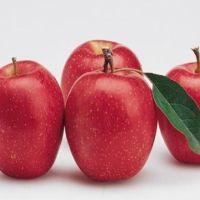 怀孕前期吃什么水果好 这几种必不可少