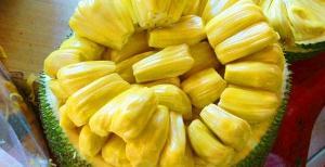 孕妇能吃菠萝蜜吗
