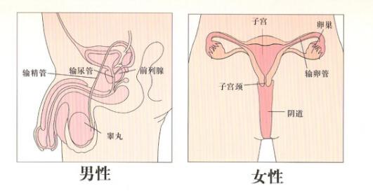 生殖道感染
