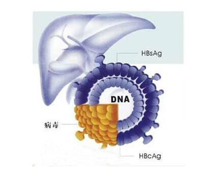 乙肝表面抗原