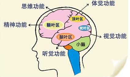 小儿大脑发育