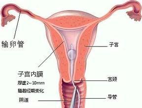 子宫内膜增厚